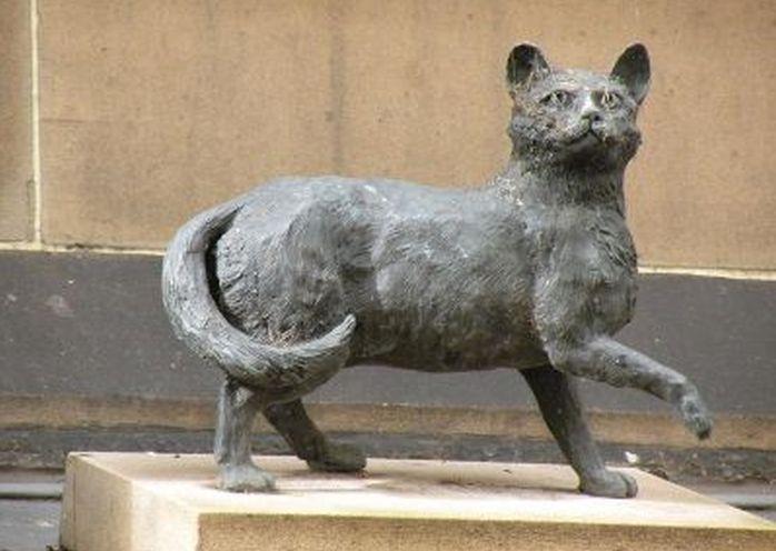 Trim the Ssilor Cat