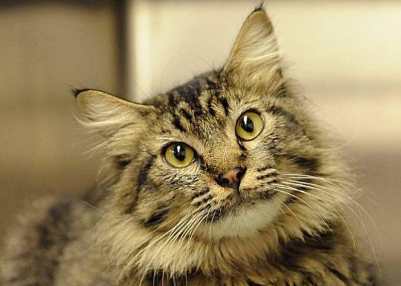 charles-cat2