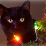 Cats like Christmas too