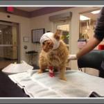 Ginger survives Tornado