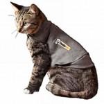 Calming Cat Shirt