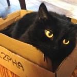 Help a Cat get a Box