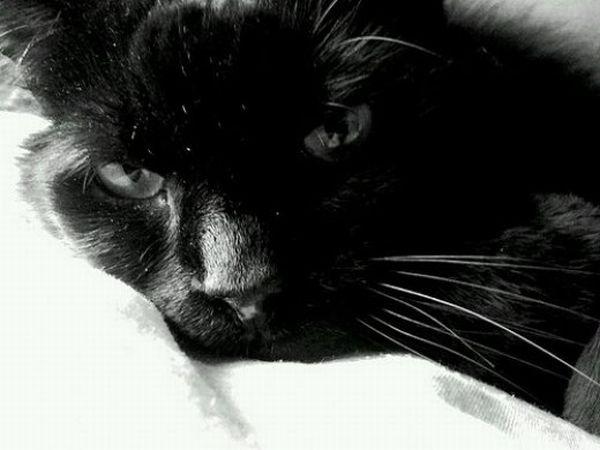 Vladimir trying to sleep