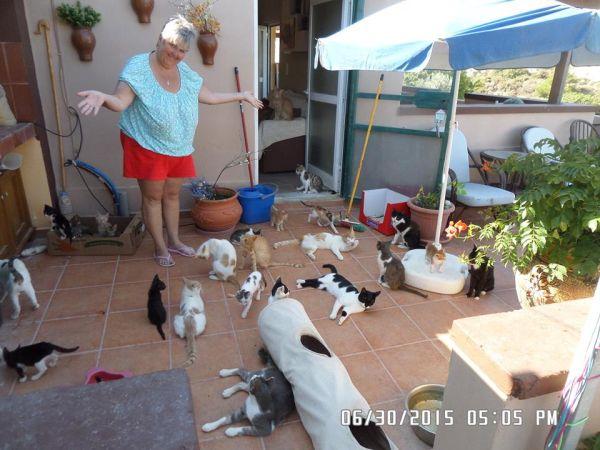 Dinnertime at Kittys of Kefalos