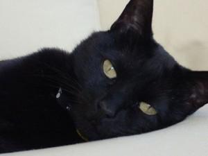 Sleek and Sleepy Vladimir Cat