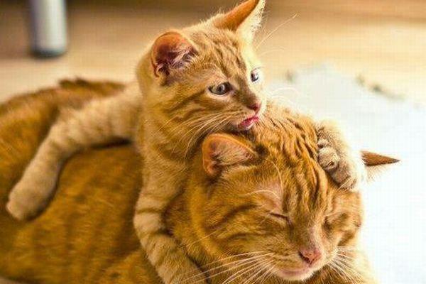 Erica and kitten
