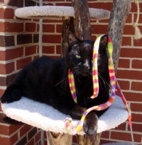 The cat dancer
