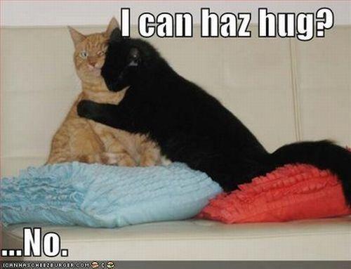 I can haz hug